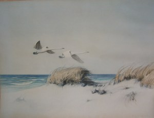 Swans in Flightunknown artist
