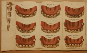 Girard's Treatise on the Teeth of the Horse 1829 Plate 2