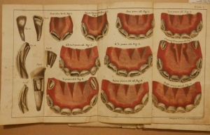 Girard's Treatise on the Teeth of the Horse 1829 Plate 1,