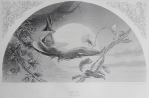 Ariel etching by CW Sharpe for Virtue's Imperial Shakspere