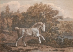 Pony at Play etching by William & Lititia Byrne @ 1795
