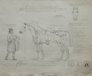 Proportions of an Arabian by C B Chalon @ 1827