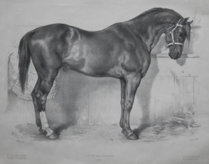 Stallion lithograph by J Laurens after Rosa Bonheur
