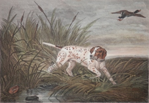 Pointer engraving by J. Scott after P. Reinagle