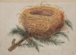 Dartford Warbler after Francis Orpen Morris & Alexander Francis Lydon @1855