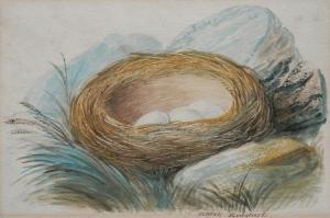 Black Redstart Nest after Francis Orpen Morris & Alexander Francis Lydon @ 1860