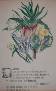 Daffodils from The Flowers of Shakespeare by Jane Elizabeth Giraud 1845