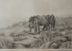 Brumbies with Foal etching by William Hunter
