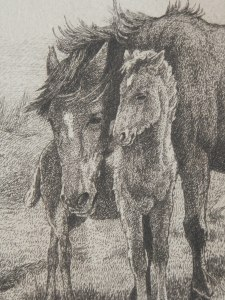 Brumbies with Foal2 etching by William Hunter