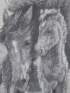 Brumbies with Foal3 etching by William Hunter